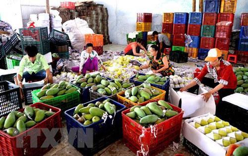 Giá trị xuất khẩu rau quả của Việt Nam 8 tháng qua giảm gần 6%