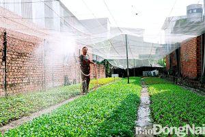 Thực hiện lộ trình ngưng chăn nuôi trên địa bàn TP.Biên Hòa: Sắp 'cán' đích