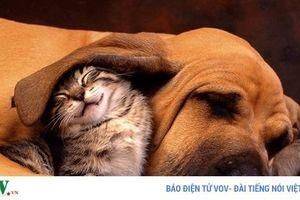 Những bức ảnh chứng minh chó mèo không 'ghét nhau' như chúng ta tưởng