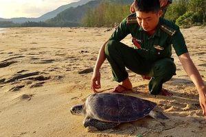 Thừa Thiên Huế: Thả cá thể rùa nằm trong sách đỏ về môi trường tự nhiên