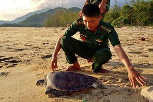 Bộ đội thả rùa quý hiếm về với biển