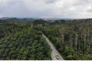 Indonesia muốn cho thuê đất công lấy tiền xây thủ đô mới