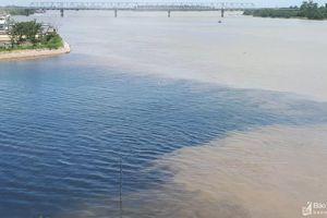 Cận cảnh nước đổi màu đen ngòm, cá chết, xác động vật nổi trên sông Đào, sông Vinh