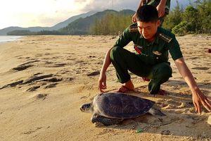 Thả rùa biển trong Sách đỏ về môi trường tự nhiên