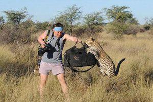 Kinh hoàng động vật hoang dã tấn công nhiếp ảnh gia
