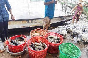 Thừa Thiên Huế: Cá chết hàng loạt trên sông Đại Giang