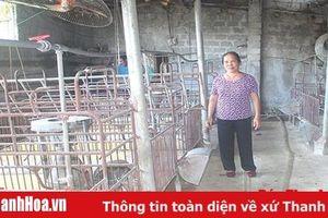 Nông dân thị xã Bỉm Sơn cần cẩn trọng khi tái đàn lợn sau dịch tả lợn châu Phi