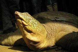 Việt Nam thành lập ba khu bảo tồn rùa nguy cấp