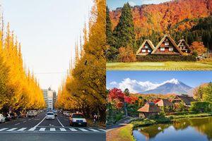 Chỉ mùa thu mới được trải nghiệm những cung đường lãng mạn như trong phim ở Nhật Bản