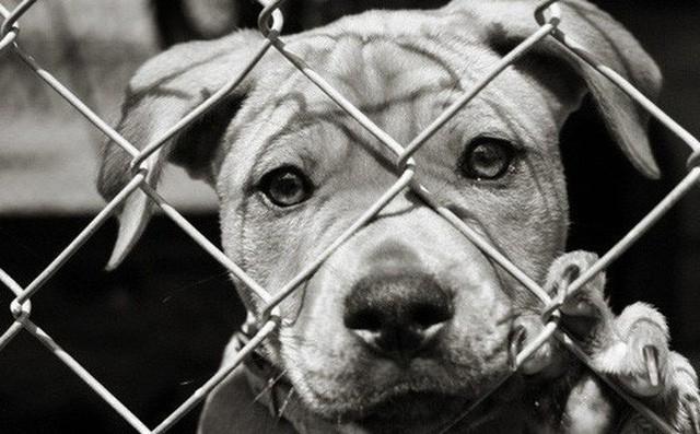TP HCM khuyên người dân bỏ ăn thịt chó