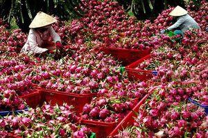 Khi nào trái cây xuất đi Trung Quốc không còn bị o ép?