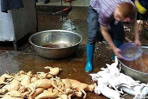 Nguy cơ nhiễm bệnh từ việc sử dụng thịt chó làm thực phẩm
