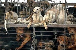 Lo nhiễm virus bệnh dại, TP HCM khuyên người dân bỏ ăn thịt chó