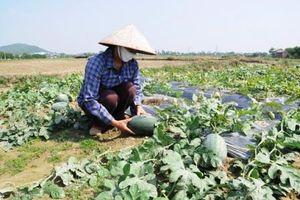 Phối hợp đồng bộ triển khai bảo hiểm nông nghiệp