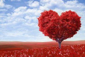 Bài ca yêu thương về trái tim