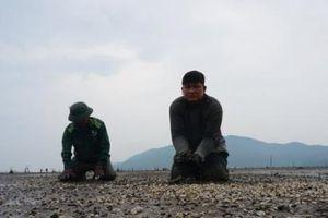 Mưa lũ kéo dài, gần 80 ha ngao nuôi chết trắng vùng ven cửa biển Hà Tĩnh