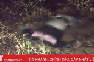 Phát hiện nam thanh niên chết trong rừng đước ở xã Thạch Môn