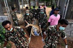 Hổ chết hàng loạt sau khi được giải cứu khỏi ngôi chùa Thái Lan