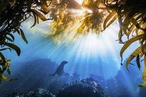 Khoảnh khắc chú sư tử biển lượn mình ẵm giải lớn về bảo tồn thiên nhiên