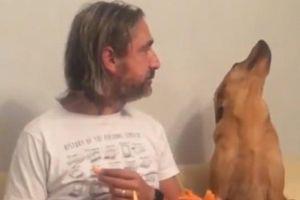 Vẻ mặt đáng yêu của chú chó 'giả vờ' không quan tâm tới đồ ăn