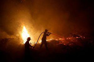 Indonesia bắt giữ gần 200 người liên quan cháy rừng