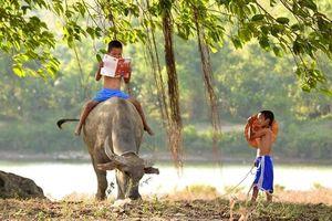 Chăn bò đọc sách nhắc kỷ niệm 'người tình' thời thơ ấu