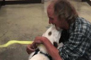 Người đàn ông vô gia cư đoàn tụ với chó cưng sau gần 2 tuần mất tích