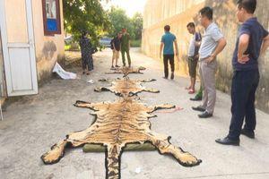 Con hổ nặng 240kg được cứu sống khi sắp bị nấu cao