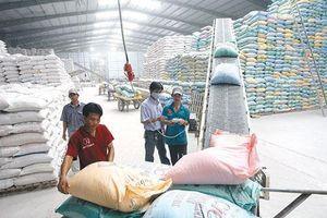 Xuất khẩu gạo 8 tháng đạt 2 tỷ USD, giảm gần 15% về giá trị