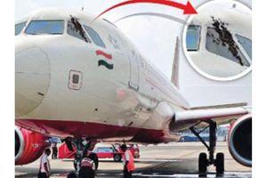Máy bay Ấn Độ hoãn bay 3,5 tiếng vì bị ong tấn công