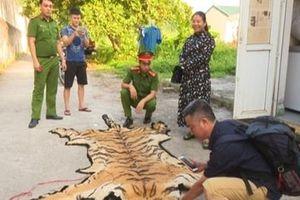 Giải cứu con hổ 2,5 tạ trước giờ vào lò nấu cao