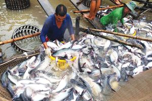 Thủy sản xuất khẩu chờ mùa lễ tết