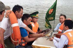 Nghệ An: Cá thể rùa biển quý hiếm nặng 11kg được thả về tự nhiên