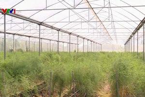 Ứng dụng công nghệ cao vào sản xuất nông nghiệp