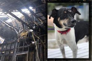 Nhà cháy, chú chó thông minh đến từng giường gọi từng người trong gia đình dậy và cái kết xót xa
