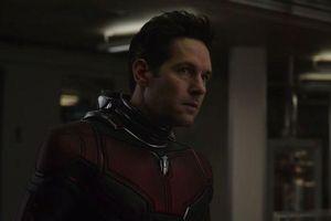 Ant-Man 3 bị Marvel hủy bỏ, có thể sẽ thành show trên Disney+!