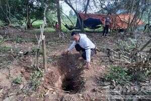 Người dân tìm thấy gỗ sưa 'khủng' trị giá hàng tỷ đồng dưới đất