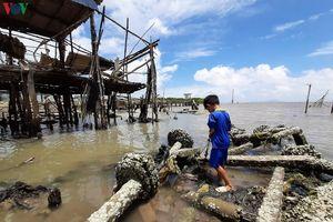 Cà Mau ban bố tình huống khẩn cấp sạt lở từ biển Tây sang biển Đông