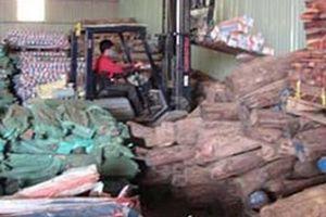 Thực hư kỳ án 'buôn lậu' 535,8m3 gỗ trắc ở miền Trung