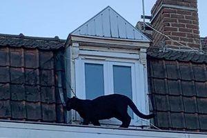 Thót tim cảnh báo đen lang thang giữa đường phố, cạy cửa vào nhà dân
