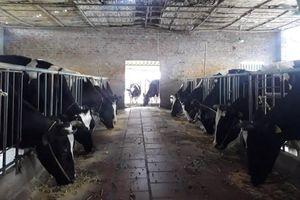Tập trung phát triển chuỗi liên kết sản xuất, tiêu thụ sản phẩm trong chăn nuôi