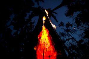 230 nhà đầu tư lớn kêu gọi các công ty bảo vệ rừng Amazon