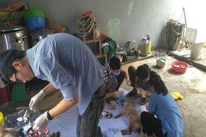 Hỗ trợ nhân đạo đàn chó trong đường dây trộm chó lớn nhất