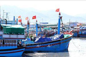 Những tàu cá vô chủ ở cảng Tịnh Hòa