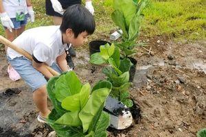 Trồng 30.000 cây góp phần phủ xanh Việt Nam