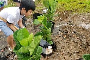 Sẽ trồng 30 nghìn cây góp phần phủ xanh Việt Nam