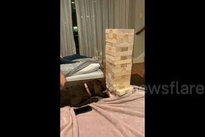 Thú vị xem chú chó chơi trò rút gỗ thành thục