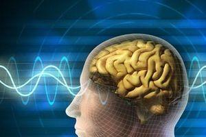 Bất ngờ với bộ não mini mới được các nhà khoa học phát triển thành công