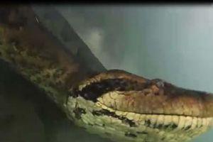 'Liều mạng' lặn xuống sông tìm 'quái vật' khổng lồ