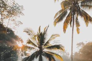 Khách Việt hoang mang, đòi hủy tour nếu Bali cấm 'ở chung phòng trước kết hôn'